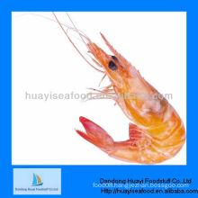 frozen shrimp pink shrimp