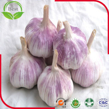 Red-Purple Skin Jinxiang Fresh Garlic