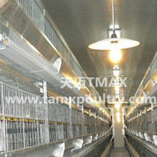 Sistem H Type Automatic Layer cage