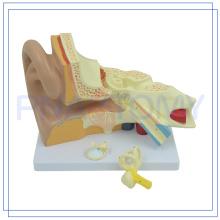PNT-0670 Modelo de oreja humana agrandada de alta calidad