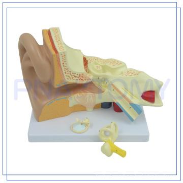 ПНТ-0670 расширенном высокого качества модели человеческого уха