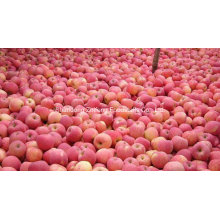 Chinese Fresh Red Apple in High Quality