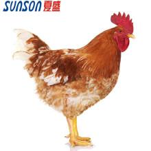 Aditivo de enzimas para piensos para pollos de engorde