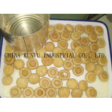 Mushroom in Tins with High Quality