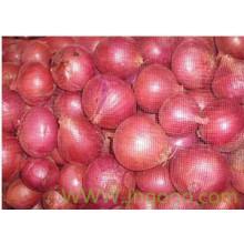 Exportar cebolla roja de alta calidad nueva cosecha