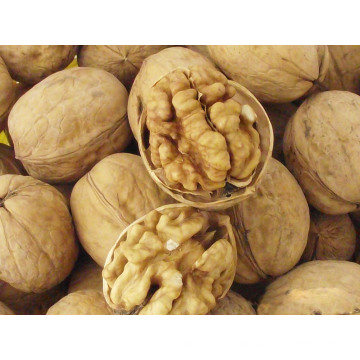 New Crop Top Quality Chinese Walnut
