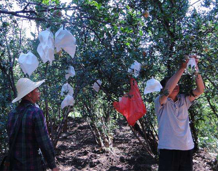 Fruit Bag Pomegranate Crop Protection