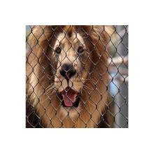 Maille de clôture de lion, clôture de lion