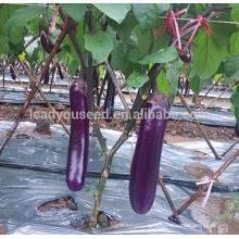 JE18 Sara hot sales purple hybrid eggplant seeds F1