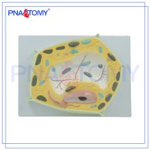 PNT-0835 Matériel didactique biologique Modèle de cellule végétale