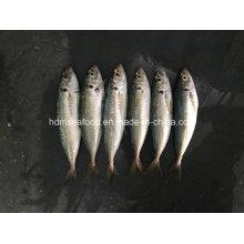 New Fish Japanese Sacd