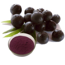 Organic Acai berry powder in bulk supply