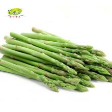 IQF Frozen White Fresh Green Asparagus Prices Per Ton