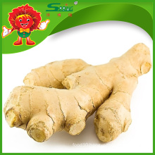2015 Yellow Ginger Air dry ginger in China