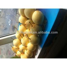 2013 Nueva cosecha de pera fresca