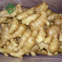 Carton Paquet Gingembre variétés de gingembre frais