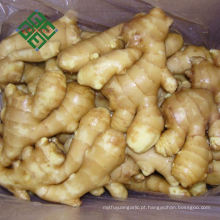 Pacote de papelão Gengibre variedades de gengibre fresco