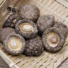 Fábrica seca 100% natural pura de la exportación del shiitake del champiñón secado
