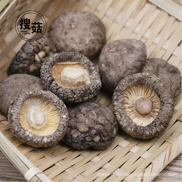 100% Pure natural organic dried mushroom shiitake export factory