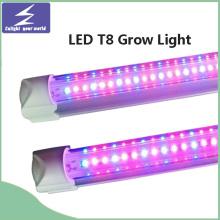 El tubo T8 LED crece la luz