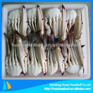 Gefrorene blaue schwimmende krabbe