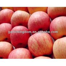 Chinesischer Apfel frisches Obst
