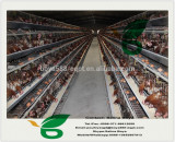 Design automatic poultry house equipment chicken layer cages with automatic egg collection and watering system
