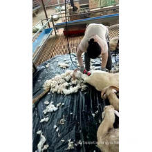 Cheap Price Other Animal Husbandry equipment high rpm Electric Flexible shaft wool shears sheep goat wool shearing machine