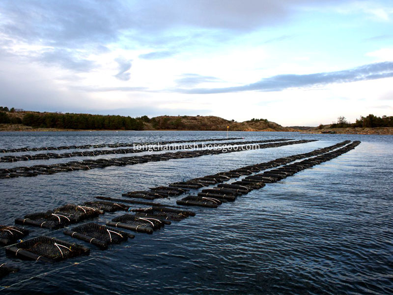 Oyster Mesh