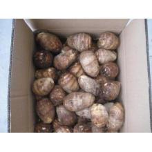 Nueva cosecha fresca buena calidad Taro en venta