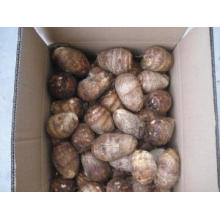 New Crop Fresh Good Quality Taro for Sale