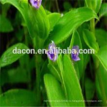 Бета-Экдизон 50% до 95% Cyanotis Вага извлечение порошок