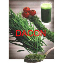Barley/Wheat grass powder (100% pure, real manufacturer)