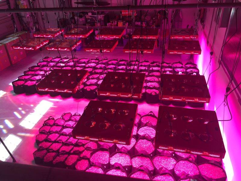 Industrial Grow Light