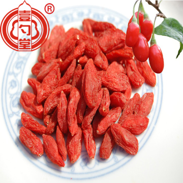 Certified Organic Raw Goji Berries Fruit