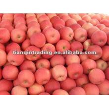 2012 shandong fresh red fuji apple