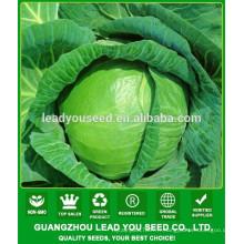 NC54 Yaoku Chine graines de chou pour la plantation, les prix des graines de chou