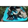 Concurrentiel Pric Dried White Back Fungus