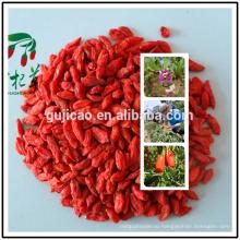 Бесплатный образец 100% натуральные сушеные ягоды годжи