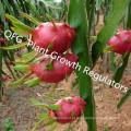 Reguladores de Crescimento Vegetal / Preços de Hormona Vegetal