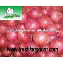 Cebolla roja y amarilla fresca, cebolla nueva del cultivo