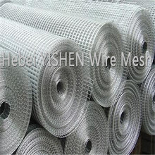 Standard size heavy wire guage galvanized welded wire mesh