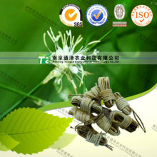 Pure Herbal Medicine Juncus Roemerianus