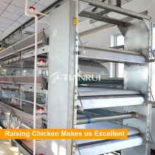 Tianrui Automatic Chicken Manure Removing System for Poultry Equipment