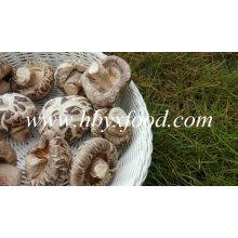 Champignons de fleurs séchées, champignons de Chine Shiitake