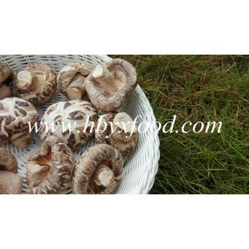 Dried Flower Mushroom, China Shiitake Mushroom