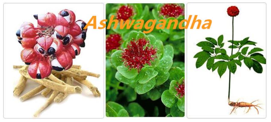 Ashwagandha6