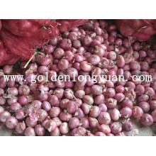 Oignon frais chinois, oignon rouge, oignon jaune
