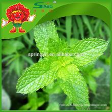 2015 Hotsale Mint leaves