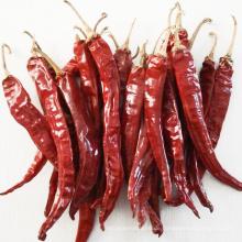 Gute Qualität Getrocknete Red Hot Chilli